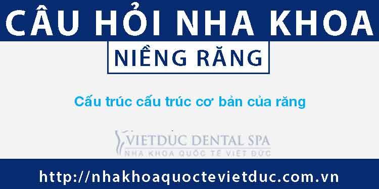 Cấu trúc cấu trúc cơ bản của răng