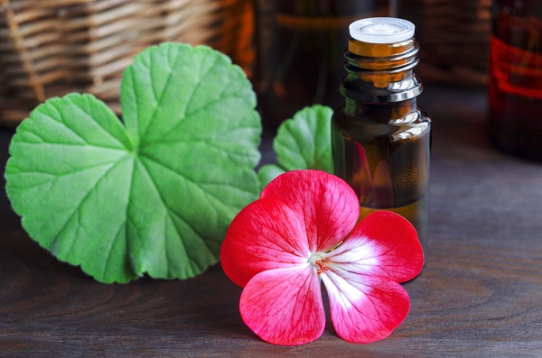 Ngăn ngừa lão hóa hiệu quả từ 9 loại tinh dầu thiên nhiên - Tinh dầu phong lữ