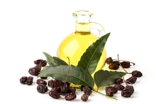 Ngăn ngừa lão hóa hiệu quả từ 9 loại tinh dầu thiên nhiên  - Tinh dầu neem