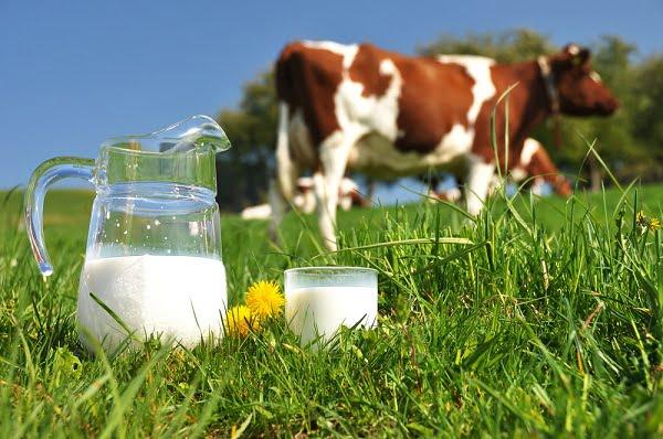 Sữa: thực phẩm không thể thiếu với phụ nữ tuổi 30 - sữa bò