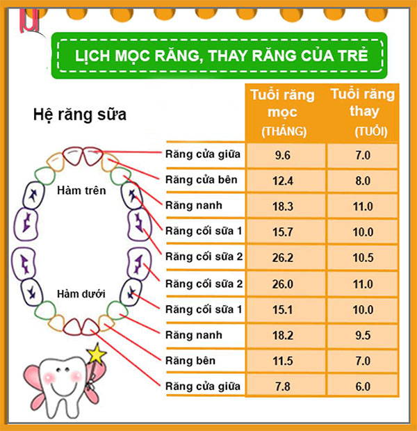 chinh-rang-cua-moc-lech-bao-nhieu-tien-1
